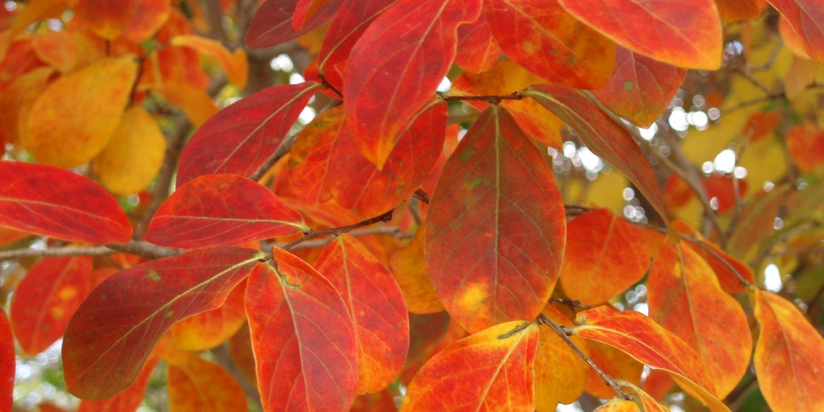 Texas Trees Pop With Fall Colors Arborilogical